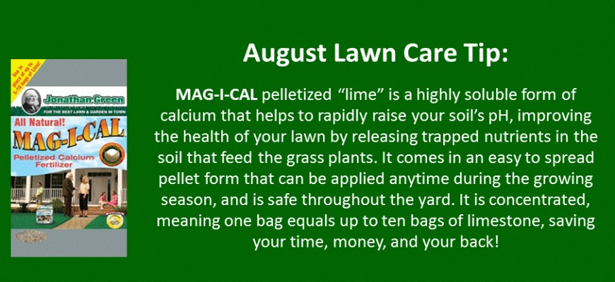 august lawn care tip