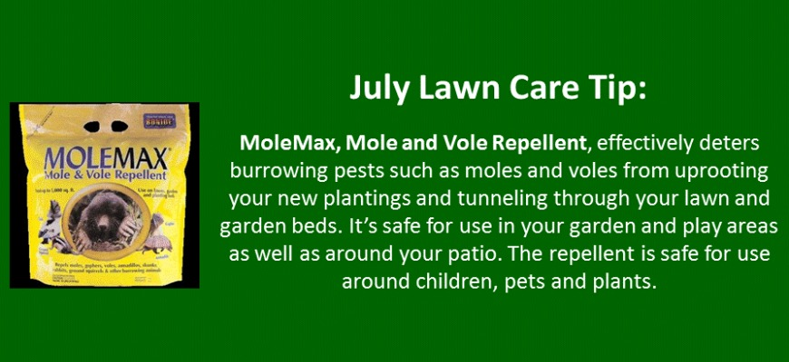july lawn care tip