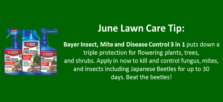june lawn care tip